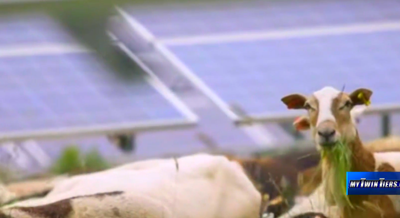 Electric Sheep: How solar companies are collaborating with farmers